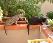 due-micetti-sul-balcone